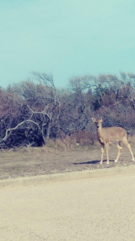 Deer 41318.jpg